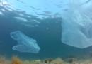 ECHA tackles the problem of microplastics